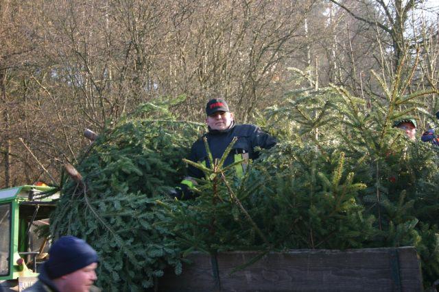 Einsammeln der Weihnachtsbäume 2005